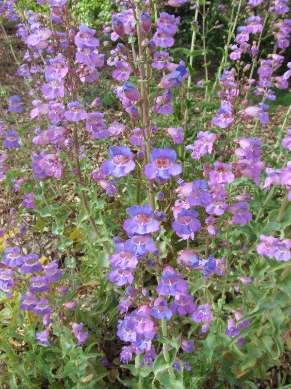 152 best images about mn native plants on pinterest