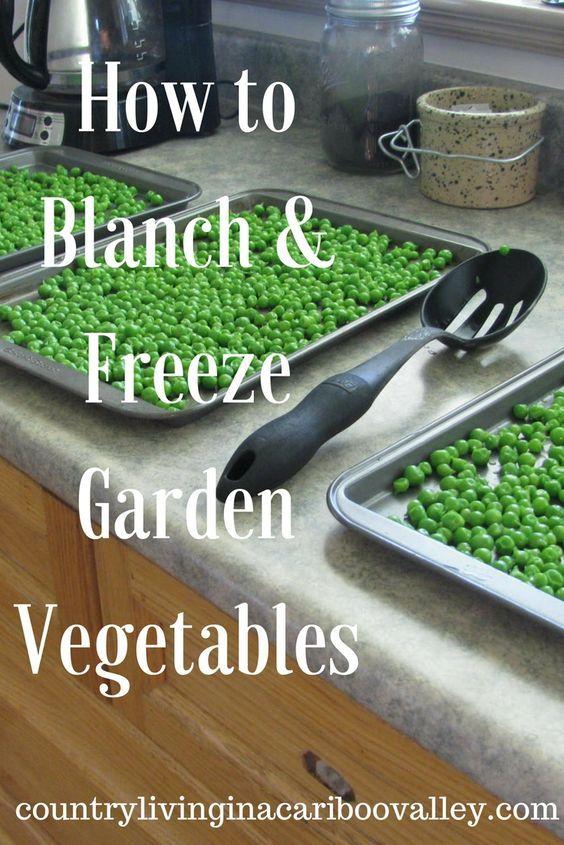Blanch and Freeze Garden Vegetables – Peas, Carrots, Beans – Rose McDonald