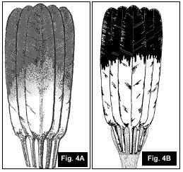 Native American Indian Flat Fan Construction Article