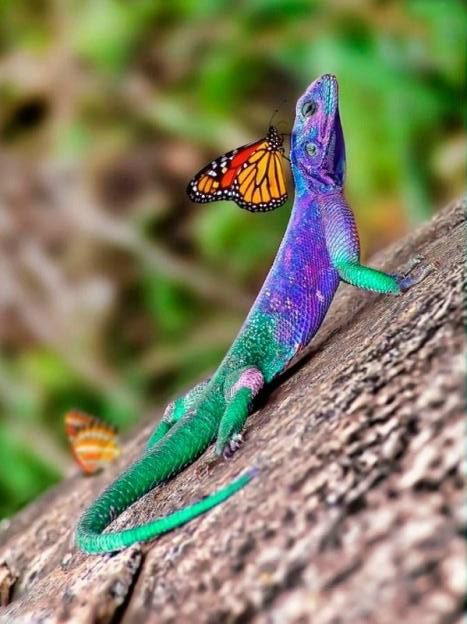 butterfly and lizard
