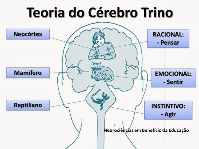 Neurociências em benefício da Educação!: Teoria do Cérebro Trino