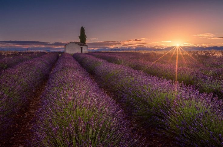 lavender sunrise by donald luo on 500px