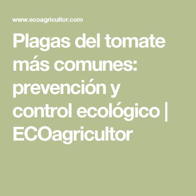 Plagas del tomate más comunes: prevención y control ecológico | ECOagricultor