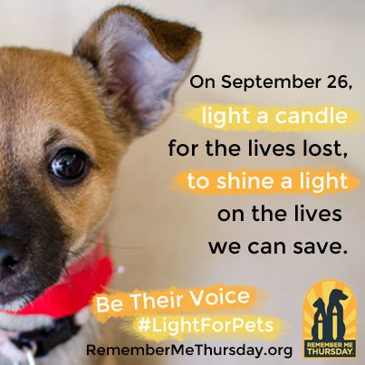 Are you passionate about pets? Does your heart melt when you see a pet in need? We need your voice in the new global awareness campaign that shines a light on those pets waiting for forever homes. Join us on Remember Me Thursday, September 26, 2013, and be a #LightForPets. http://www.RememberMeThursday.org