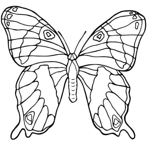 Butterfly Animal Coloring PagesKids