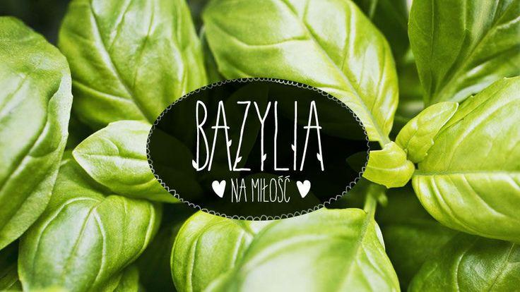 Bazylia #lidl #ryneczeklidla #ziola #bazylia