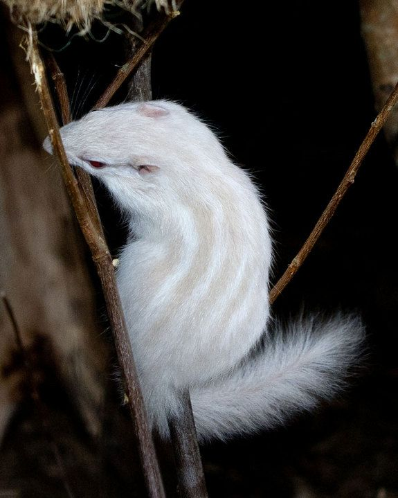 L'album rose et blanc : des animaux albinos
