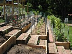 Vegetable Garden Terraces: note the access walkway on each level--most pictures on Pinterest don't have it, but then you're wrestling to get to your tomatoes.