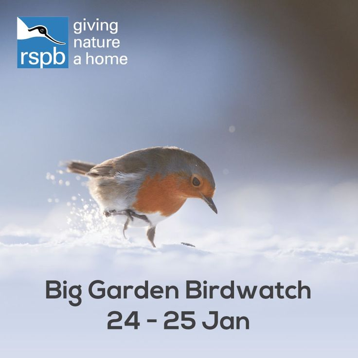 Ready for the RSPB's Big Garden Birdwatch? Sign up and take part in the biggest wildlife survey in the world.   What to look out for  Which birds you'll see can vary depending on where you live, what food you use and where your food is placed. But one thing's for certain: spend a little time preparing the ideal environment for our feathered friends and you're sure to give nature a home in your garden.