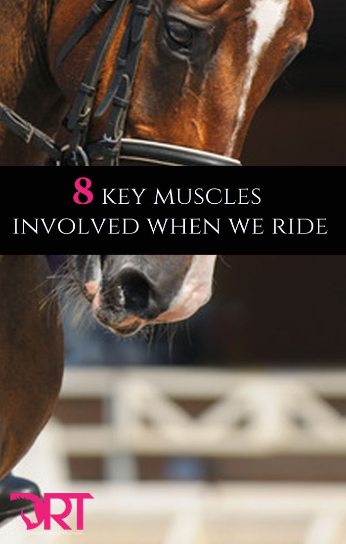 8 key muscles involved when we ride dressage