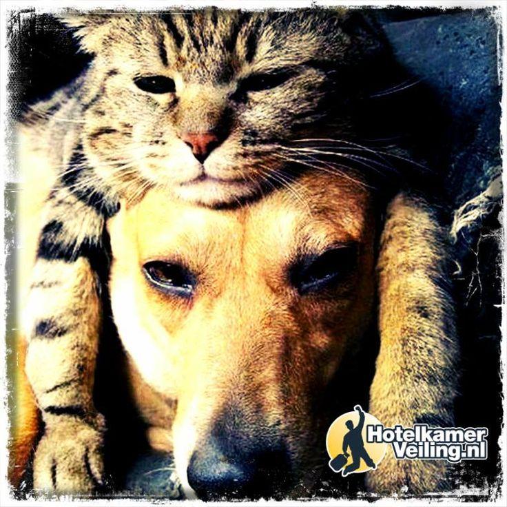 Krijgt jouw huisdier iets extra's vandaag? #Dierendag #4okt
