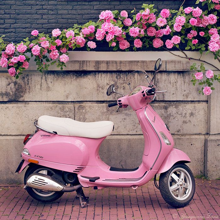 Europe Photography – Pink Scooter and Roses, Fine Art Travel Photograph, Nursery Art, Large Wall Art