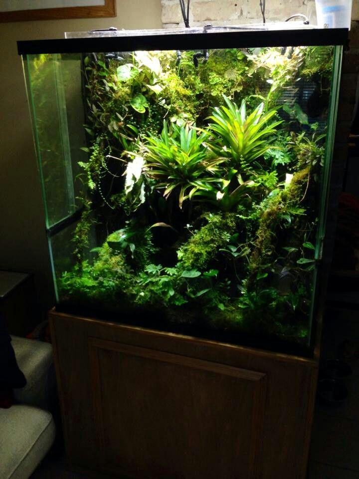17 Best Images About Reptile Vivariums On Pinterest