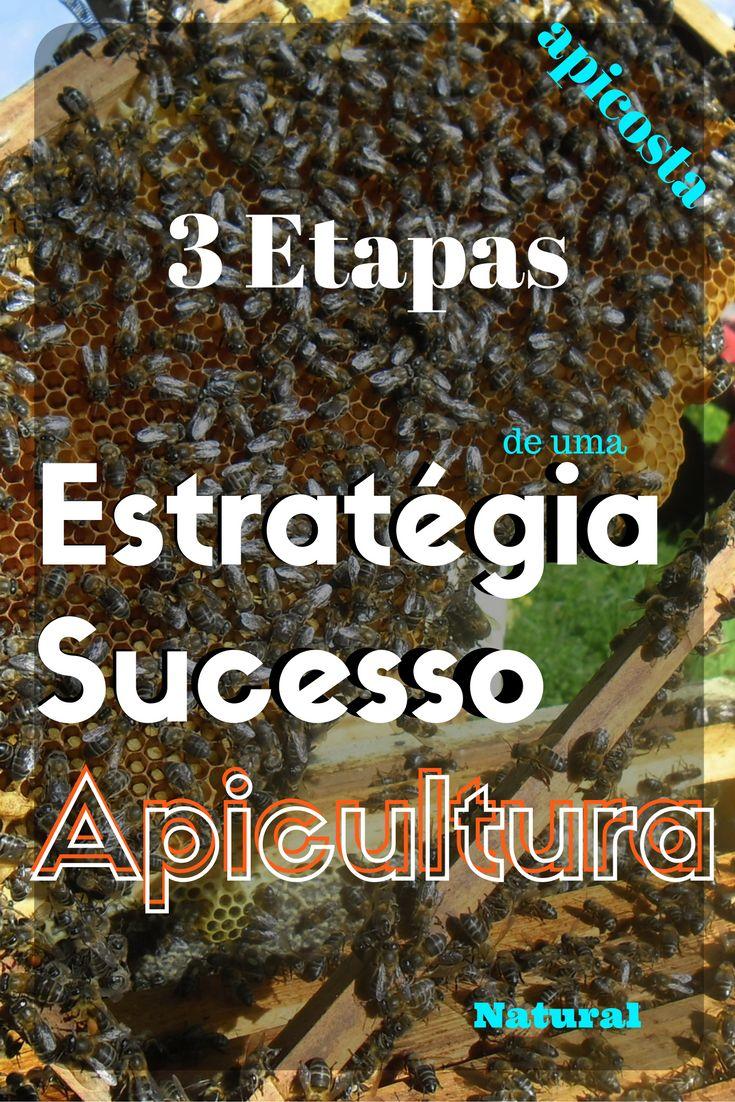 3 Etapas de uma estratégia de sucesso na Apicultura Natural. http://apicosta.com/3-etapas-de-uma-estrategia-de-sucesso-na-apicultura/