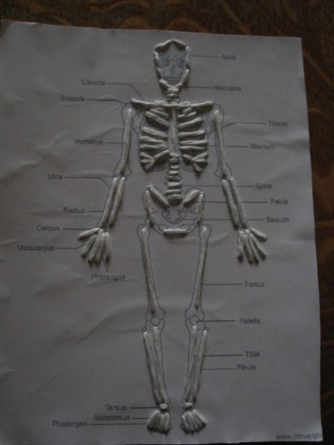 25+ best ideas about skeletal system activities on pinterest, Skeleton