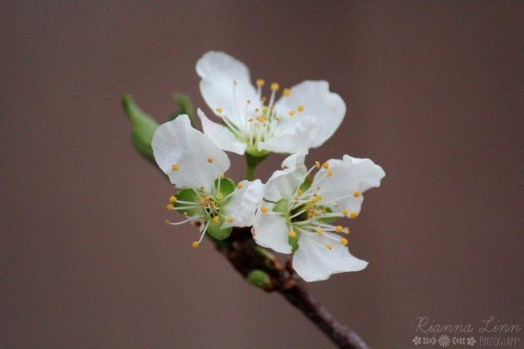 bouquet fleuriste en ligne 51 #fleurs #bouquet