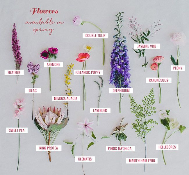 Variety Of Designs For A Spectacular: 1000+ Ideas About Spring Flowers On Pinterest