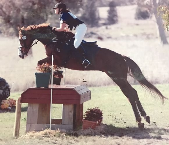 16hh 13yo TB Gelding | Eventing horses | Horse for sale in NSW | Australia | Horse Deals