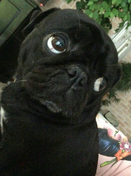 Those eyes...hiw can u say no?!?