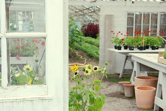 Växthus vid Nibble trädgård i Ytterjärna. www.olgamagnusson.se