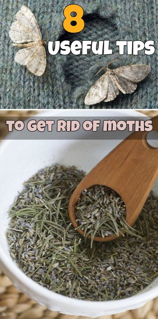 Unique Learn useful tips to get rid of moths