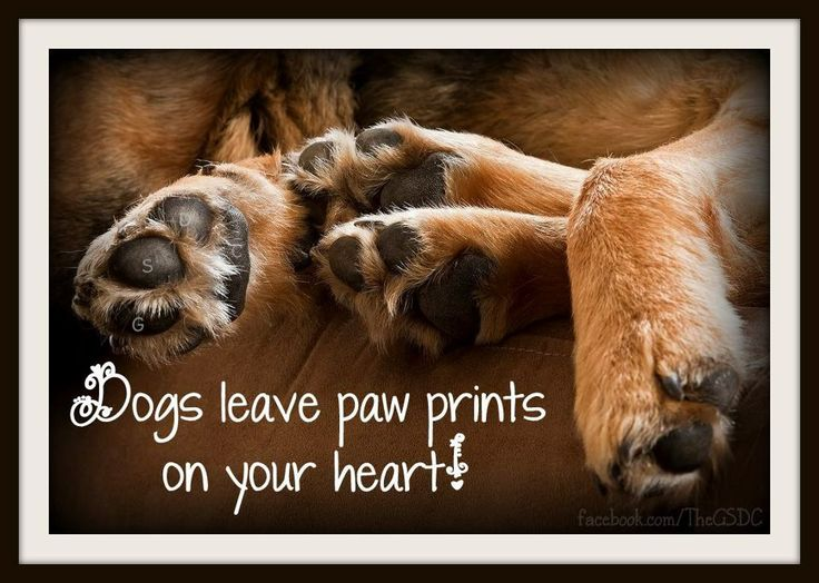 Dogs leave paw prints on your heart.: Dogs Leaves, Leaves Paw, Pet, Doggies Wisdom, Dogs Rules, Paw Prints, Doggies Dreamin, Animal, Golden Retriever