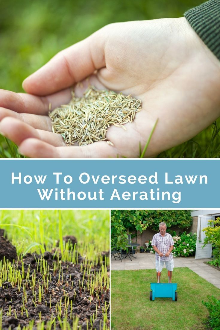 How To Overseed Lawn Without Aerating Lawn Lawn Care Tips Lawn