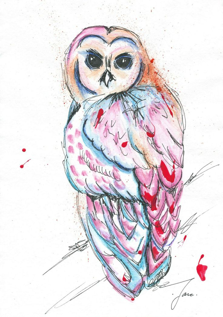 Owl, Water Colour Pencils, Jane Burton Art