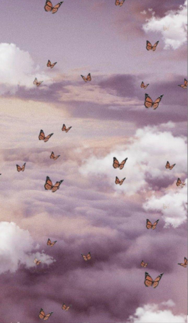 Pin by dfnatc on tiktok in 2020 butterfly wallpaper