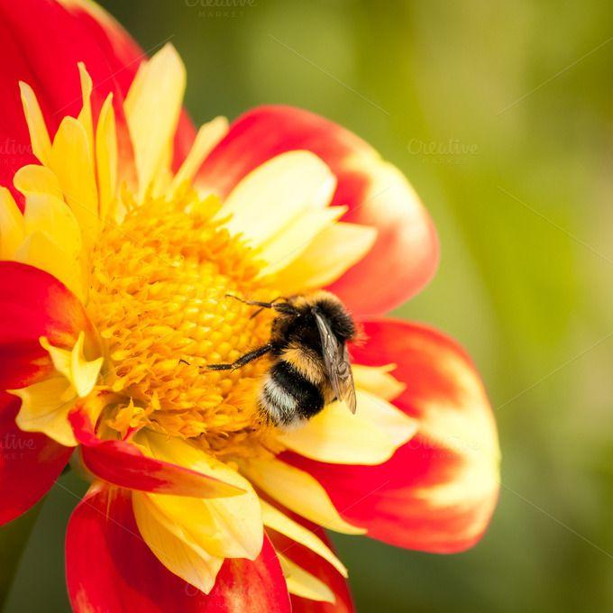 Let it Bee... by Screeny's Photo Bucket on Creative Market