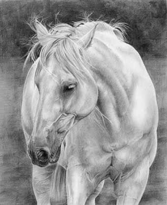 Google Image Result for http://starving-artists.net/GALLERIES/hardie/lh08--horse.jpg