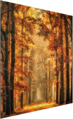 Alu Dibond Bild - Märchenwald im Herbst - Quadrat 1:1 45x45-22.00-PP-ADB-WH Jetzt bestellen unter: https://moebel.ladendirekt.de/dekoration/bilder-und-rahmen/bilder/?uid=14463e95-2c74-5c8b-aaea-1cc0fb619380&utm_source=pinterest&utm_medium=pin&utm_campaign=boards #heim #bilder #rahmen #dekoration