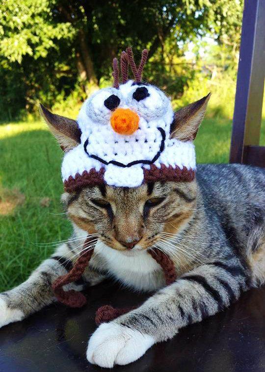 Chaque chat a sa personnalité, il est donc normal d'offrir à votre félin un chapeau qui lui correspond. Vous vous êtes bien offert un pantalon en crochet vous, alors faites profiter un peu votre compa