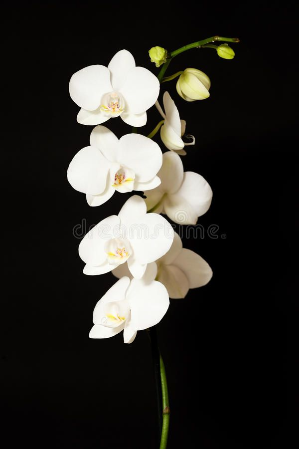 Pin By B Gurr On Art Inspiration Orchids Painting Orchid Illustration Orchid Photography