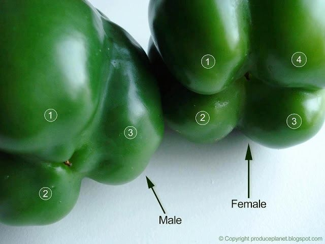 Flip the bell peppers over to check their gender. The ones with four bumps are female and those with three bumps are male. The female peppers are full of seeds, but sweeter and better for eating raw and the males are better for cooking. That's sweet!.