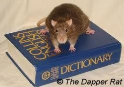 The Ratty Fun Pages