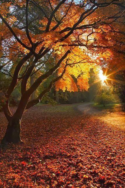 Autumn_sunshine.jpg (427×640)