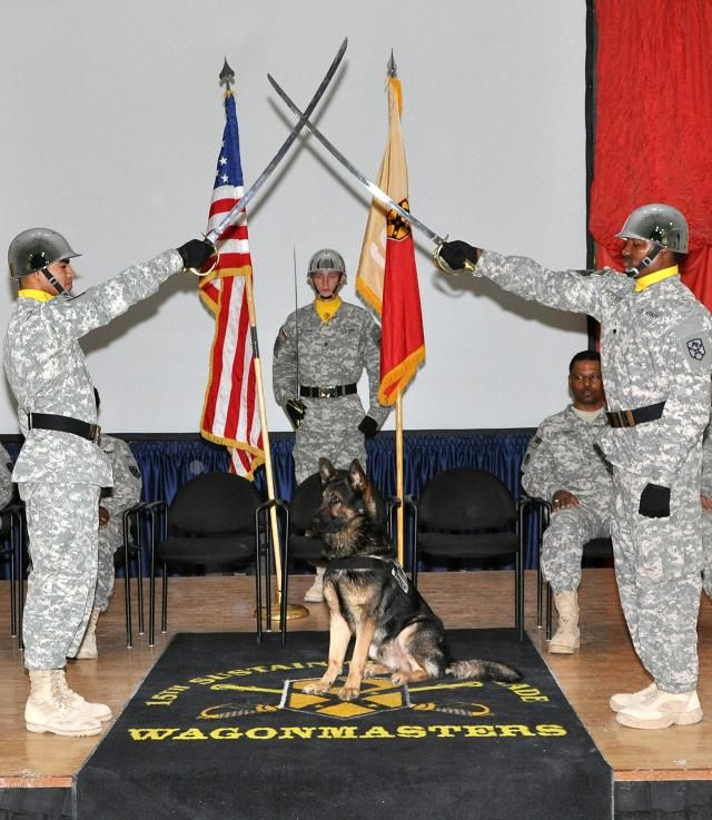 Military working dogs are given a rank one higher than their handlers, so it's normal to have canine NCOs, but very rare to have one officially inducted into the corps, said Staff Sgt.  Cully Parr, a McBride, Mich., native and Rex's military police dog handler for 178th MP Det.  The duo paired up in July after Rex, a two-year-old, finished the military's dog version of basic training at Lackland Air Force Base in San Antonio, Parr said.