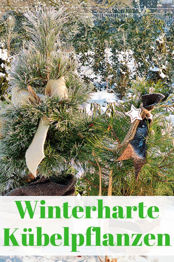 Winterharte k belpflanzen garden k belpflanzen for Topfpflanzen winterhart