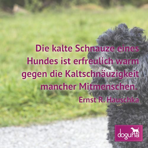 Die kalte Schnauze eines Hundes ist erfreulich warm gegen die Kaltschnäuzigkeit mancher Mitmenschen. (Ernst R. Hauschka) #hund #hunde #dog #dogs #dogsofinstagram #love #beautiful #instadog #ilovemydog #doglover #dogoftheday #doggy #dogstagram #hamburg #germany #deutschland #weisheiten #lovedogs #doglove #zitate #fb