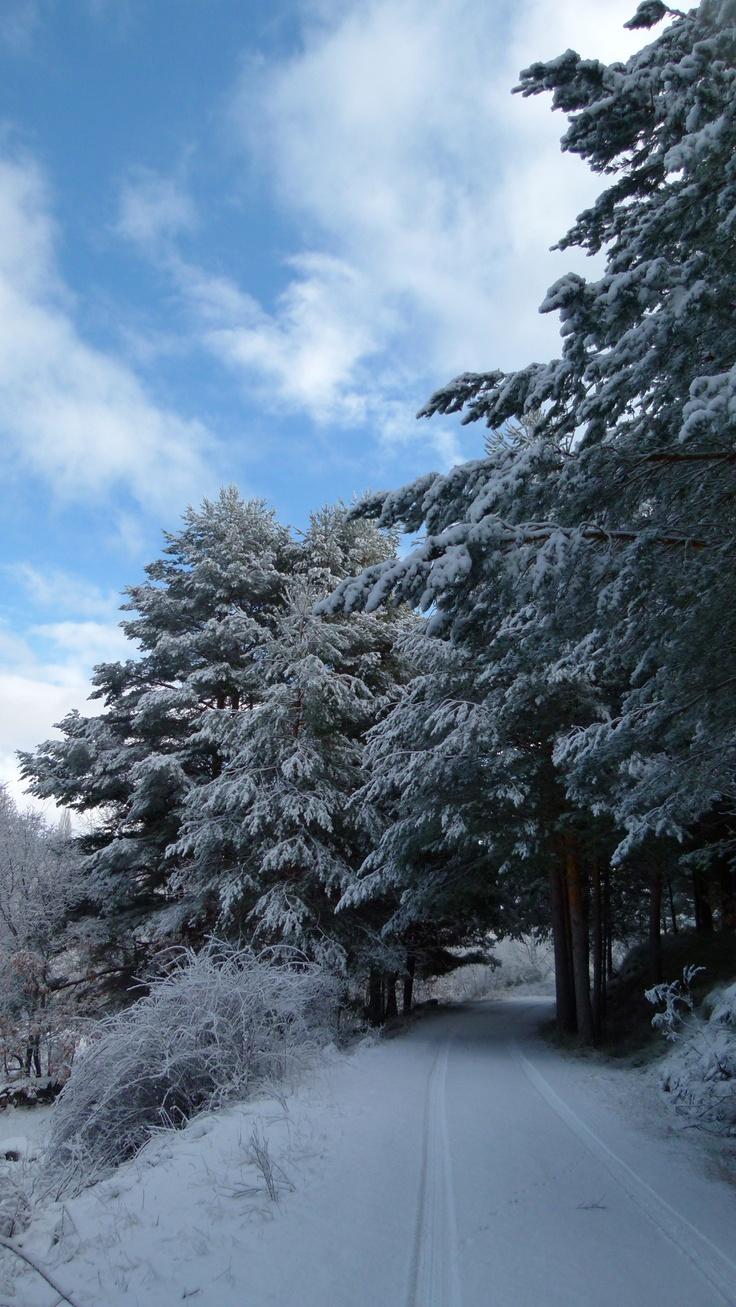El Pinar de Hoyocasero es un espacio natural protegido situado al sur de la provincia de Ávila, en la Sierra de Gredos.