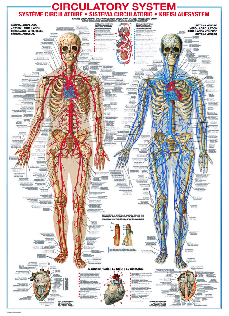 10 Best Medical Charts - Discovering The Human Body Images On