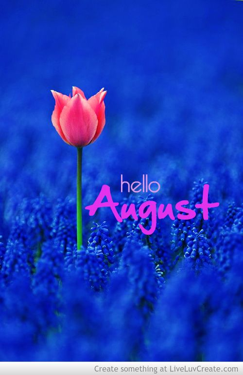 Awesome Hello August · Pink TulipsPink FlowersPretty ...