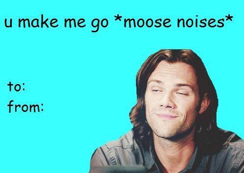 HAHAHAHAHAAAAA moose