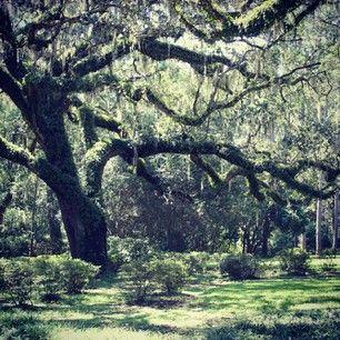 Eden Garden State Park, Santa Rosa Beach Florida. Beautiful place to take a nature walk.