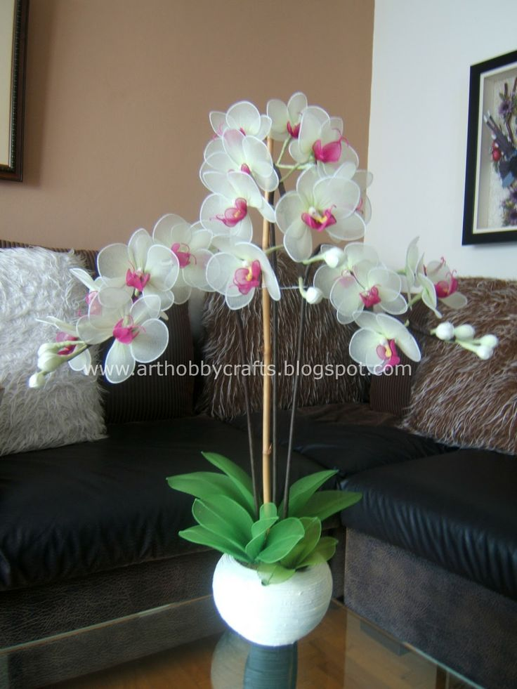 Phalaenopsis orchid -Stocking