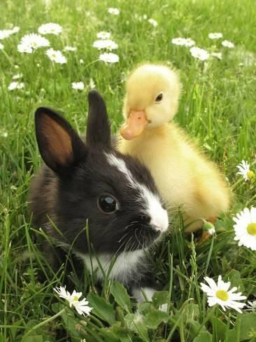 Rabbit Bunny And Duckling Best FriendsBy Richard PetersonYumJellyDonuts