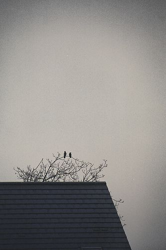 Love birds-pinned by http://www.auntbucky.com  #home #birds #animal