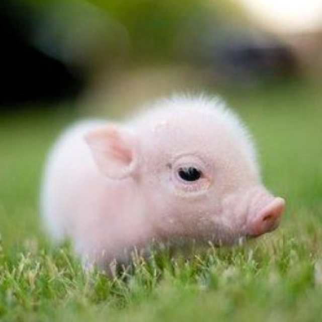 I want one of these!  Name for a girl pinky and name for a boy mr cutie pie