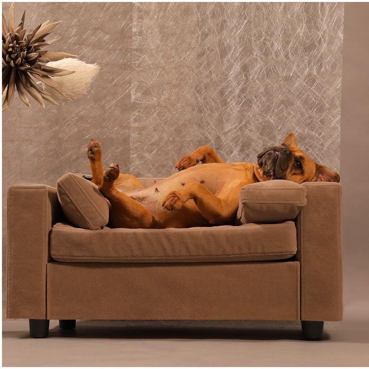 Ils sont bien sur nos canapés! Couchage relaxant et orthopédique en mousse à  mémoire de forme. Tout pour le confort et santé de votre compagnon. #dogbeddesign #canapepourchien #canapepourchat #chat #chien #litpourchien #litpourchat #litspourchien